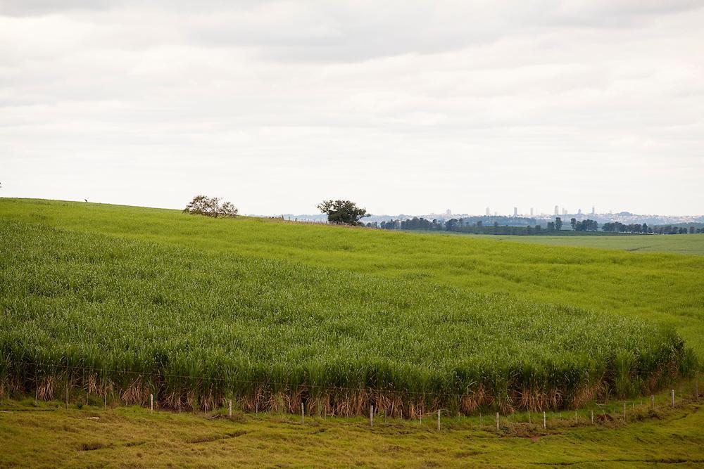 Divisa Nova_MG, Brasil...Plantacao de cana-de-acucar em Divisa Nova...Sugar cane plantation in Divisa Nova...Foto: LEO DRUMOND / NITRO