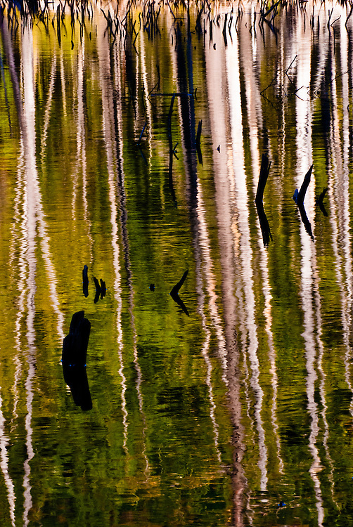 Photograph of trees reflecting in a beaver pond in the Adirondacks.