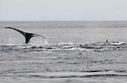 Avistamiento de ballenas en la Isla de Coiba_VM