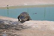 Israel, Aravah, Crocodile and alligator breeding farm