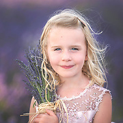 Miss S - Mayfield Lavender