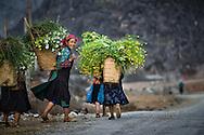 Vietnam images-Hà Giang-Cuộc sống đời thường hoàng thế nhiệm