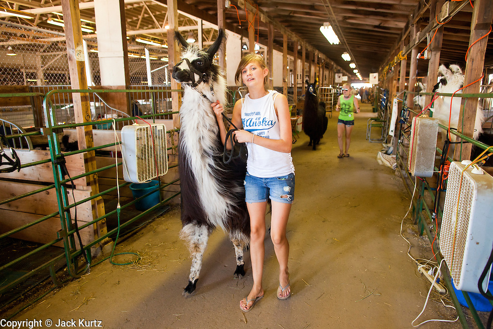 "01 SEPTEMBER 2011 - ST. PAUL, MN:  High school 4-H students leads their llamas out of the barn at the Minnesota State Fair. The Minnesota State Fair is one of the largest state fairs in the United States. It's called ""the Great Minnesota Get Together"" and includes numerous agricultural exhibits, a vast midway with rides and games, horse shows and rodeos. Nearly two million people a year visit the fair, which is located in St. Paul.   PHOTO BY JACK KURTZ"