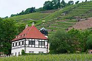 Weingut Hof Loessnitz, Radebeul bei Dresden, Sachsen, Deutschland.|.historical vineyard Loessnitz Manor, Radebeul near Dresden, Germany