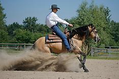 Quarter horse 2008