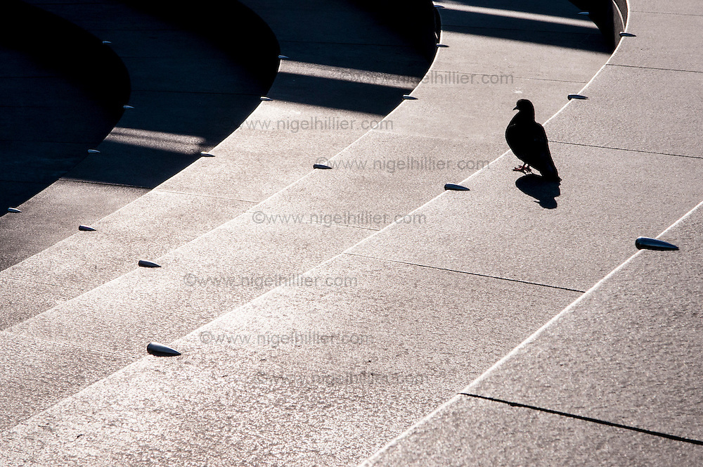 The Southbank, pigeon on steps