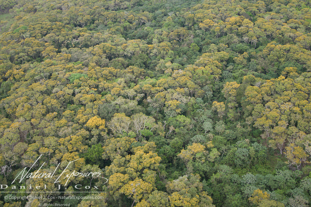 Forest in the Pantana, Brazil.