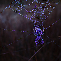 Spider Webs and Bees