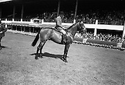 "09/08/1967<br /> 08/09/1967<br /> 09 August 1967<br /> R.D.S. Horse Show, Ballsbridge, Dublin. ""Urney Road"", Michael Hickey up, property of Mrs E. Wood, Chaddesley Corbett By Kidderminster, Worcester England, bred by S.W. Rule, Co. Down, winner of the RDS Perpetual Champion Cup in the Best Hunter in the show."