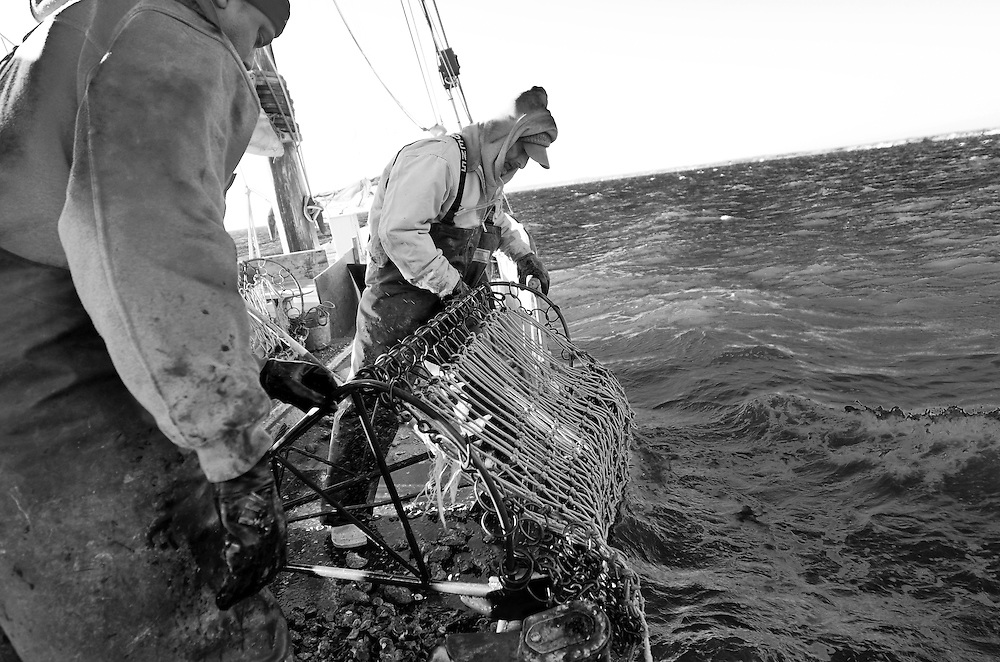 Skipjack oystering on the Chesapeake Bay on the HMS Krentz, one of the few remaining working skipjacks, November 9, 2012..John A. Pavoncello photo