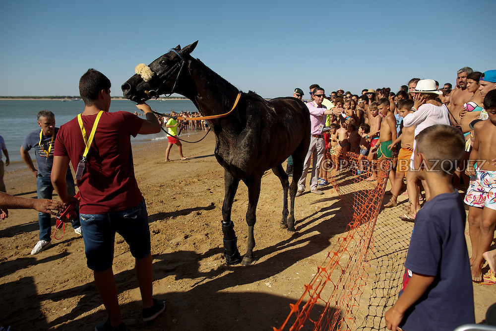 12/08/2016. A horse gets injured in the leg while racing along the beach during the beach horse races on August 12, 2016 in Sanlucar de Barrameda, Cadiz province, Spain. Sanlucar de Barrameda yearly horse races traditional origin started with informal races of horse's owners delivering fish from the port to the markets. But the first formal races date back to 1845 and they are the second oldest in Spain, after Madrid. The horse races take place near the Guadalquivir river mouth during August