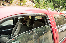 As the residents retuned to their house to get more of their belongings, their pets awiat their return as volunteers watch over their truck and motorcycles, north of Hoberg's Resort. (Kim Ringeisen / Polaris)