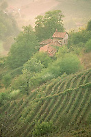 October 1992, Langhe region, Piedmont, Italy --- Vineyards surround a farmhouse on a hillside in the Langhe region.  Piedmont, Italy. --- Image by © Owen Franken/CORBIS