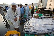 Deira. Shindagha Market. Fish Souq. Tuna.