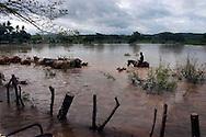 Habitantes de Puerto parada Usulutan evacuan  Junio de 2010 ganado debido a las Inundaciones por el paso de la tormenta Tropical Agatha. Segun datos del Ministerio de Agricultura las perdidas en la agricultura y la ganaderia asenderan 4 millones. IL photo/Roberto Marquez