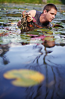 Patrick Plummer pulls the roots of lily pads out of the silt at Fernan Lake while harvesting the aquatic leaves Monday.