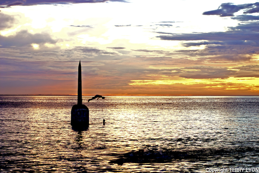 A tradition of Cottesloe Beach is to swim out to the old pylon and dive off.