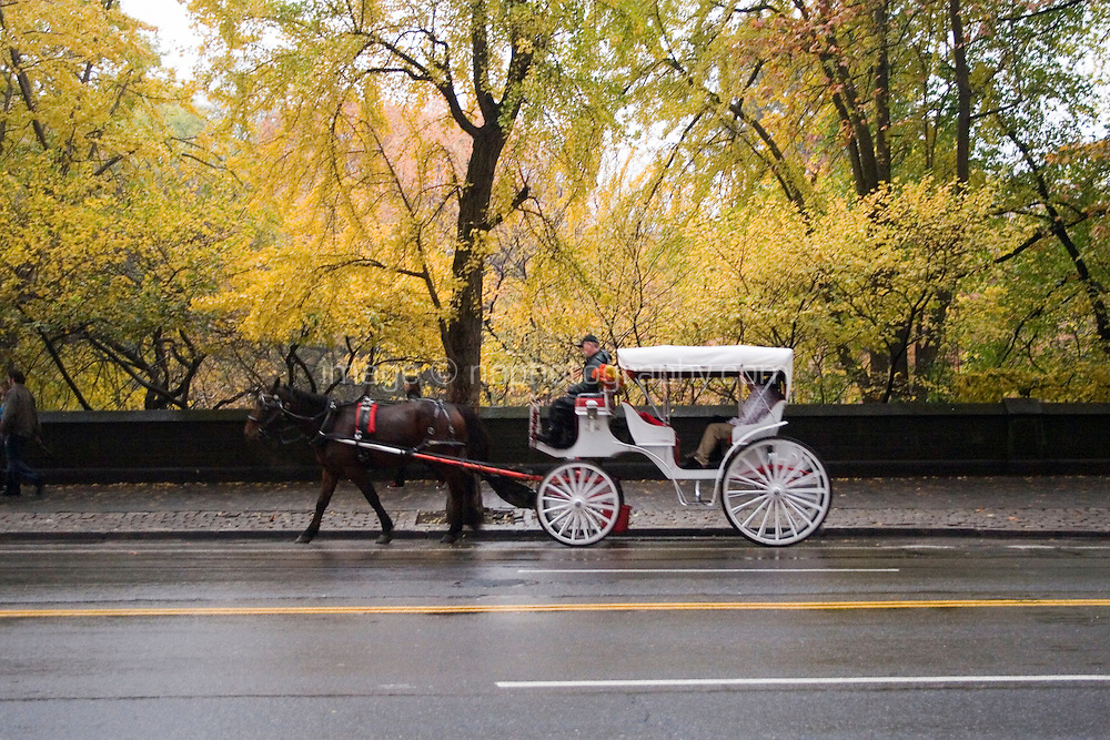Traditional white horse and carraige at Central Park South Manhattan New York