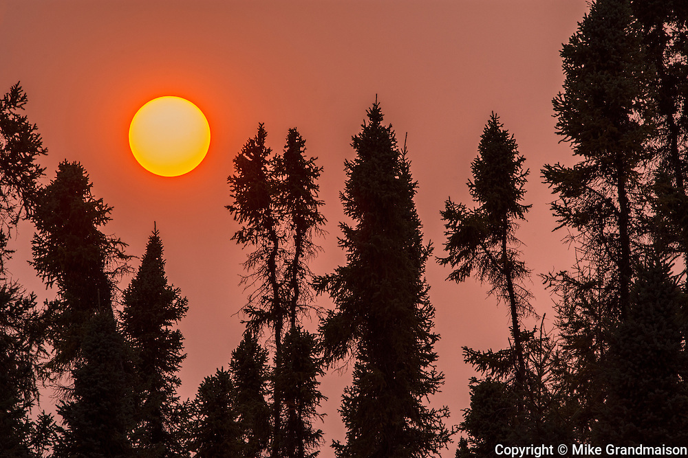 Sunset and black spruce forest<br /> Thompson<br /> Manitoba<br /> Canada