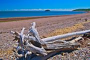 Driftwood along the Bay of Fundy, Advocate Harbour, Nova Scotia, Canada