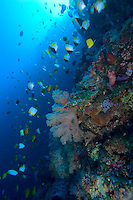 Wakatobi National Marine Park, Indonesia