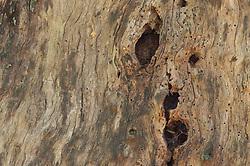 Tree Snag Detail, San Juan Island, Washington, US