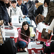"""CHIBA, JAPAN - JANUARY 27 : People with their dogs wait for their flight at the airport in Chiba, Japan on January 27, 2017. Japan Airlines """"wan wan jet tour"""" allows owners and their dogs to travel together on a charter flight for a special three-day domestic tour to Kagoshima Prefecture, southwestern Japan. As part of the package tour, the owners and their dogs will also get to stay together in a hotel and go sightseeing in rented cars. (Photo by Richard Atrero de Guzman/ANADOLU Agency)"""