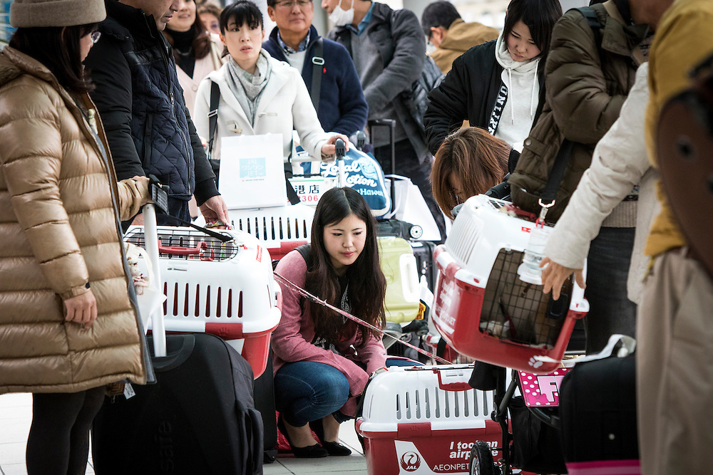 "CHIBA, JAPAN - JANUARY 27 : People with their dogs wait for their flight at the airport in Chiba, Japan on January 27, 2017. Japan Airlines ""wan wan jet tour"" allows owners and their dogs to travel together on a charter flight for a special three-day domestic tour to Kagoshima Prefecture, southwestern Japan. As part of the package tour, the owners and their dogs will also get to stay together in a hotel and go sightseeing in rented cars. (Photo by Richard Atrero de Guzman/ANADOLU Agency)"