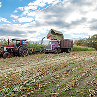 Harvesting corn in Canterbury. All Content is Copyright of Kathie Fife Photography. Downloading, copying and using images without permission is a violation of Copyright.