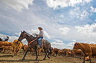 Joe Peila, Wally Badgett, rope and drag calves to fire, cattle branding, John L. Moore Lazy TL Ranch, north of Miles City, Montana