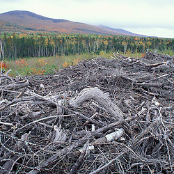 10 miles N.E. of Greenville, ME. Northern Forest.  A jumble of trees marks a clearcut in northern Maine near Kokadjo. Logging slash.