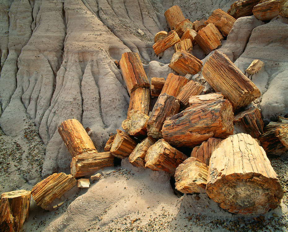 0113-1012 ~ Copyright: George H. H. Huey ~  Petrified logs at Blue Mesa. Petrified Forest National Park, Arizona.