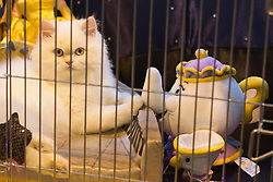 © Licensed to London News Pictures. 23/11/2013. London, England. Cat in a fairy-tale themed cage. The 37th Supreme Cat Show takes place at the National Exhibition Centre in Birmingham, UK. Photo credit: Bettina Strenske/LNP