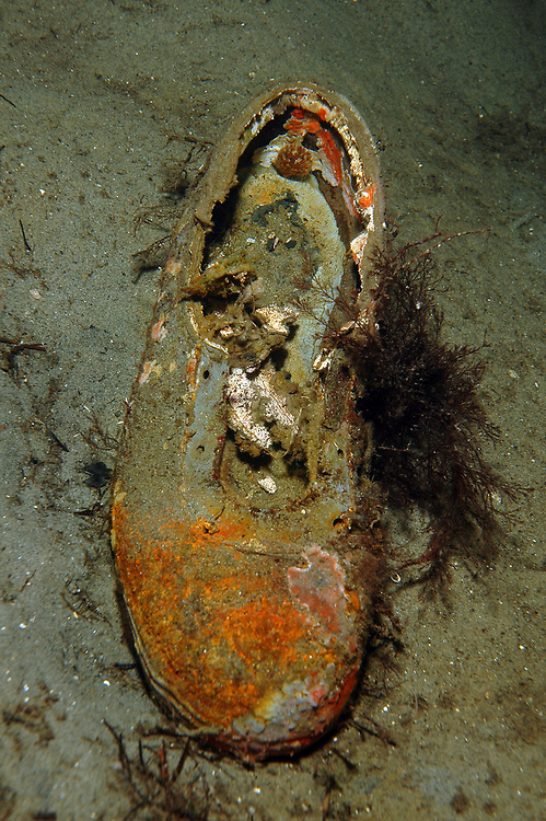 Shoe at the bottom of the sea. Location : Stavanger, Norway