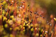Mosses showing red fruiting bodies. Cerro de la Muerte, Costa Rica. Photo by Eduardo Libby