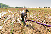24 APRIL 2014 - CHIANG SAEN, CHIANG RAI, THAILAND:  A corn farmer in Chiang Saen, Thailand, irrigates his newly planted corn field in a flood plain on the Mekong River in Chiang Rai province. Chiang Rai province in northern Thailand is facing a drought this year. The 2014 drought has been brought on by lower than normal dry season rains. At the same time, closing dams in Yunnan province of China has caused the level of the Mekong River to drop suddenly exposing rocks and sandbars in the normally navigable Mekong River. Changes in the Mekong's levels means commercial shipping can't progress past Chiang Saen. Dozens of ships are tied up in the port area along the city's waterfront.                   PHOTO BY JACK KURTZ