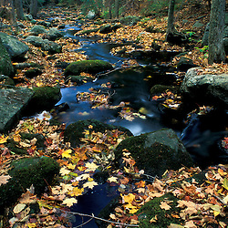 Fallen leaves decorate a small brook on a recently purchased TPL property.  Goshen, CT