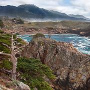 Cypress Skeleton - Point Lobos, CA -  HDR