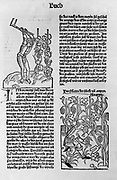 Cultivation and care of grapevines Woodcut book illustraion by Pietro de Crescenzi, ca. 1233-ca. 1320. Published: [1493]