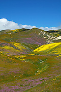 Central Valley Spring Bloom on the Hills