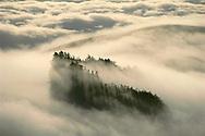 Redwoods in fog, Monterey Bay, California, USA