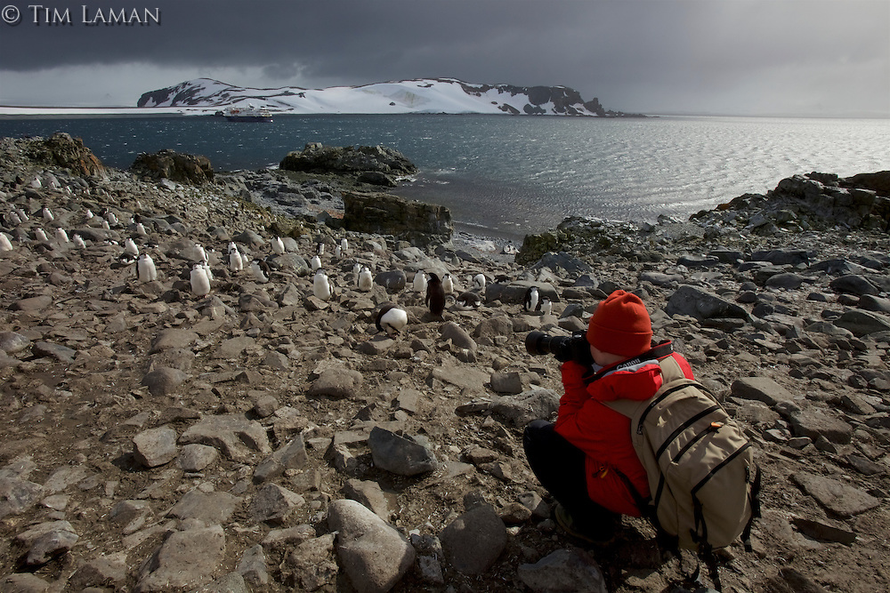 Russell Laman photographing at a Chinstrap Penguin colony.<br /><br />Half Moon Island, South Shetland Islands group, Antarctica