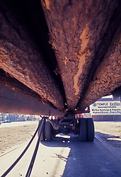 Stock photo of massive logs loaded onto a truck for transport