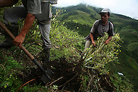 Workers hired by the Colombian government manually eradicate coca crops in La Via Alta, in a remote area of the southern Colombian state of Nariño, on Friday, June 22, 2007. (Photo/Scott Dalton)