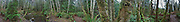 360 degree panorama Anderson Landing Preserve, Kitsap Peninsula, Washington, USA