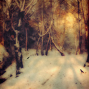 Warm winter sunrise in a snowy forest - textured photograph<br />