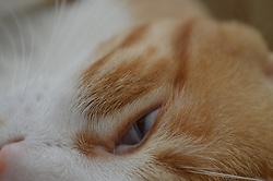 June 29, 2017 - Ankara, Turkey - A domestic cat prepares to sleep on the sofa during hot weather in summer in Ankara, Turkey on June 29, 2017. (Credit Image: © Altan Gocher/NurPhoto via ZUMA Press)