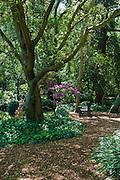 Descanso Gardens, La Canada, Flintridge, California