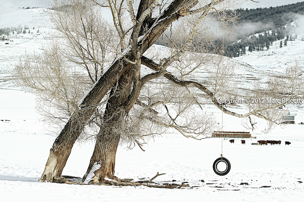 "SHOT 2/12/12 1:48:55 PM - A tire swing hangs from a tree near Crested Butte, Co. Crested Butte is a Home Rule Municipality in Gunnison County, Colorado, United States. A former coal mining town now called ""the last great Colorado ski town"", Crested Butte is a destination for skiing, mountain biking, and a variety of other outdoor activities. The population was 1,529 at the 2000 census. The Colorado General Assembly has designated Crested Butte the wildflower capital of Colorado. The primary winter activity in Crested Butte is skiing or snowboarding at nearby Crested Butte Mountain Resort in Mount Crested Butte, Colorado. Backcountry skiing in the surrounding mountains is some of the best in Colorado. The mountain, Crested Butte, rises to 12,162 feet (3,700 m) above sea level..(Photo by Marc Piscotty / © 2012)"