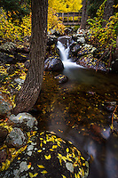 A small stream rushes through the hillside and under a bridge in Big Cottonwood Canyon near Salt Lake City, Utah in the Fall.  Fall colors envelope the area adding a splash of color to the rocks along its banks.